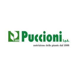 Puccioni