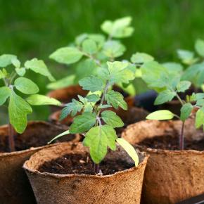 Продукция для выращивания растений, рассады