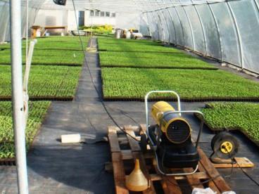 Субстрат La Flora на рассаде перца - отзывы