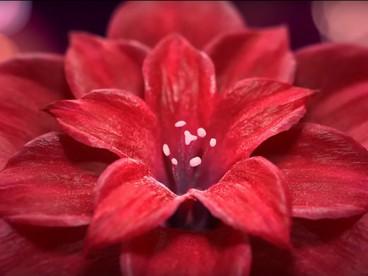 Корпоративное видео Jiffygroup 2014