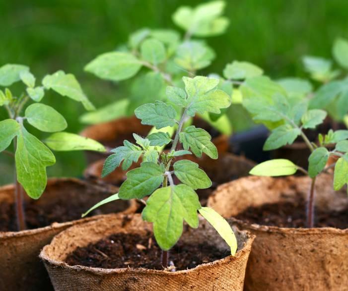 Продукція для вирощування рослин, розсадництва